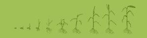 Agrokraft
