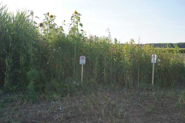 Biogas-Blühmischungen
